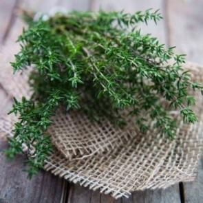 Kekik Tohumu (Thymus Vulgaris)