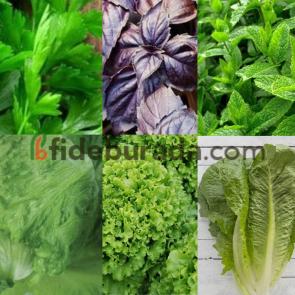 Yeşillik Hobi Paketi